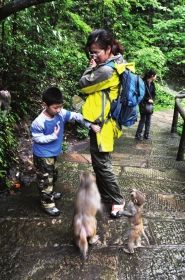 湖南张家界景区,几只猴子在向游客索要食物。资料图片