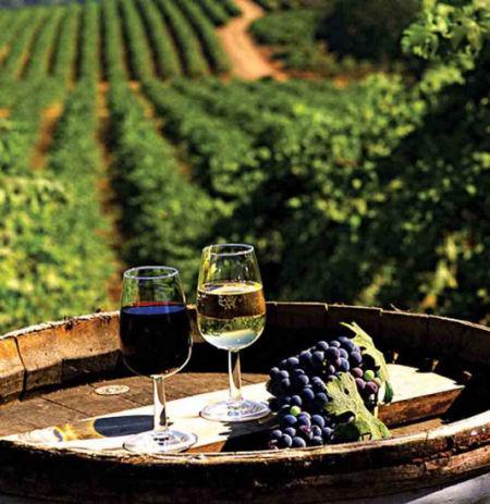 资料图:法国葡萄园。