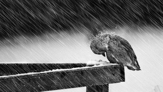 全球经济寒冬后暖春还会远吗|信心|危机|寒冬