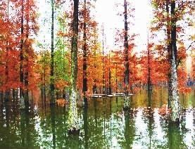 夫夷江湿地公园彩林 杨坚 摄