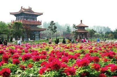 中国国花园牡丹