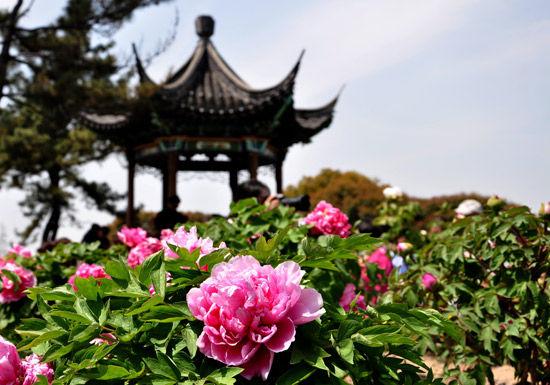 江南园林牡丹(宋羽)