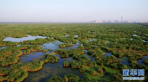 这是航拍的龙凤湿地自然保护区(7月4日摄)。新华社记者王凯摄
