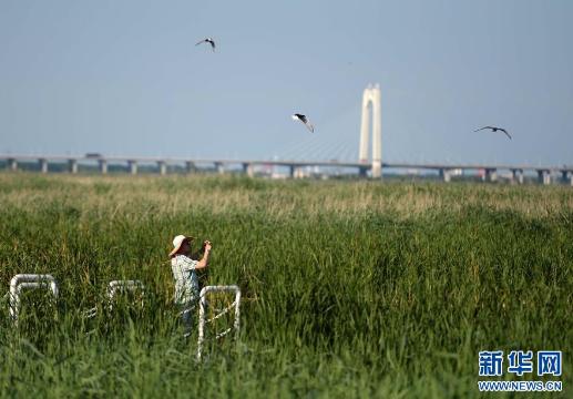 7月3日,游客在龙凤湿地自然保护区游览。新华社记者王凯摄