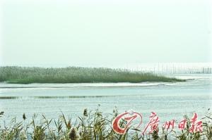 报告称上海海平面上升 到2050年存海水侵入可能