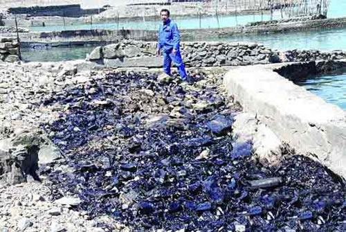 青岛部分海域遭受油污污染 污染源正在查找(图)