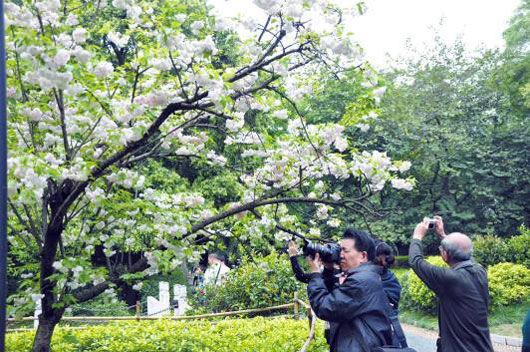 柳州推进绿化美化彩化工程建设花园城市速写(组图)