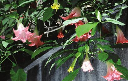 生活小贴士:家中植物藏毒远离小娃娃