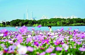"""""""花艺界奥林匹克""""9月在广州举行 尽邀爱花人花城赏群芳"""