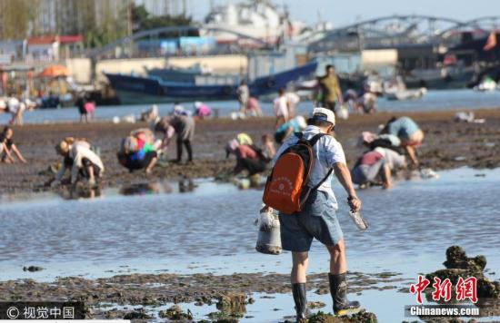 青岛退大潮 市民扎堆栈桥海滩挖蛤蜊