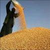 关键词:粮食增产