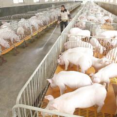 去年生猪产量占世界一半多