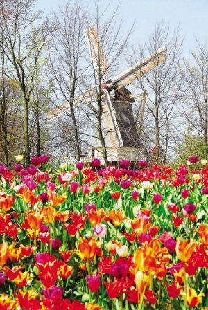 荷兰:一个独具气质的国度(组图)