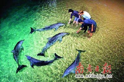 探寻海豚岛的奥秘(组图)