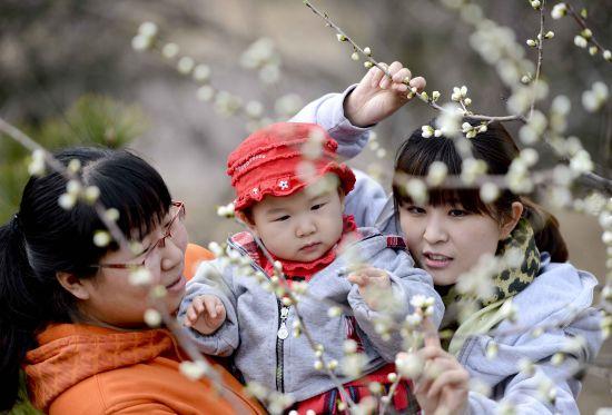第二十四届北京桃花节将在植物园拉开帷幕