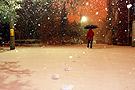 漫天白雪悄然飘下