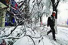 街头树枝被积雪压断