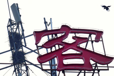 嘉兴日报:喜鹊筑巢选铁塔