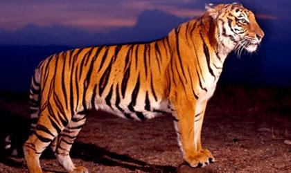绿镜第2期:失乐园-中国虎的最后100年