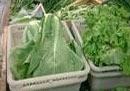 北京超市增大采购量加速蔬菜销售