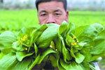 多地蔬菜滞销价格普降