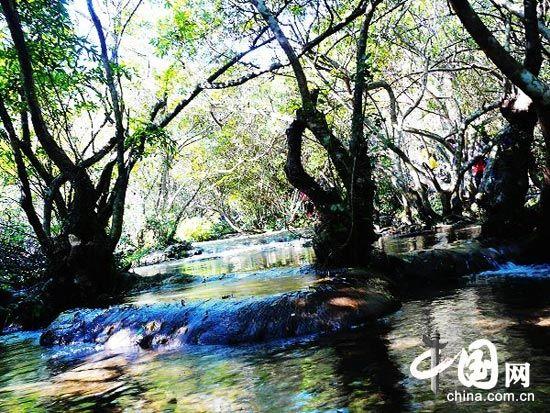 荔波喀斯特森林 (贵州)