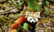 第21期:寻访青藏高原野生动物