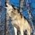 第31期:打狼且慢狂欢