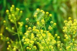 290种上海原生植物或已消失 专家称与人口流动相关