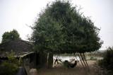 图文:村民在树下休息