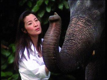 野生救援协会主席 30秒广告唤醒10亿环保心