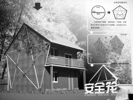 竹子内部结构图片欣赏