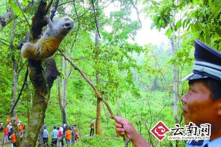 83只野生动物重返原始森林(图)