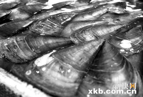 广东发布安全预警市民慎食贝类水产