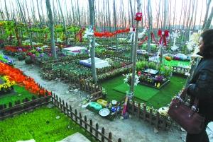三千��物死后埋在承包林地