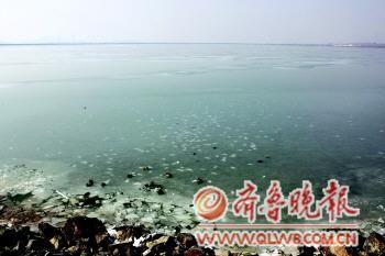 3日,养殖区由于冰封出现大量死鱼。