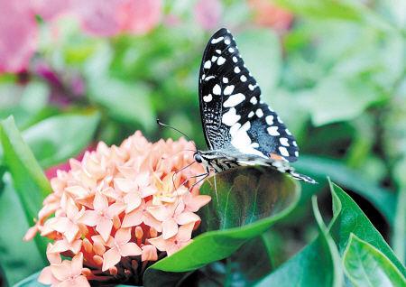 观花赏蝶就去省植物园