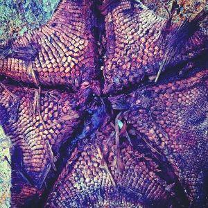 这不是一只麻袋,而是一只被油污杀死的海星。 本版图片 早报记者 徐晓林