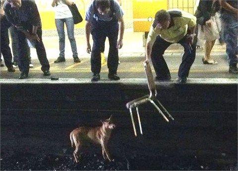 港铁工作人员尝试吸引流浪狗注意,但未能成功将其引导到铁轨外。