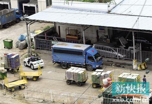 5月26日中午,广州火车站货运站场,工作人员将疑似装有野生动物的货物拉到停车处。