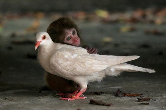 图文:视觉联盟单幅日常大奖猴子与鸽子