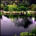图文:湖中影