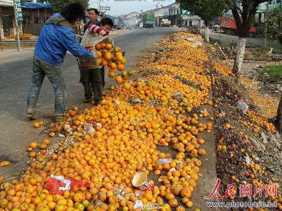 湖北宜昌柑橘滞销被弃路边任腐烂(组图)