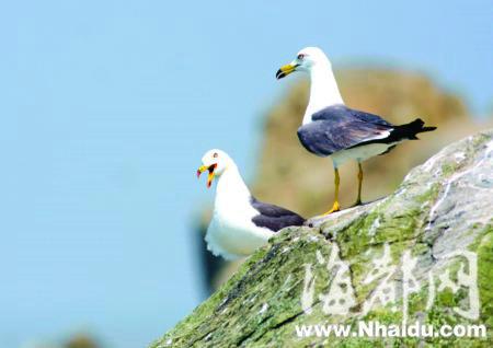 省野生动物保护协会观鸟分会志愿者刚结束长乐