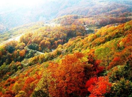 北京香山红叶闻名园内各类树木达26万余株(图)