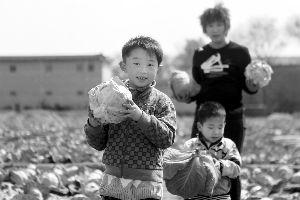 4月23日,小朋友帮菜农收菜。不少济南市民得知菜农困难后主动帮忙。
