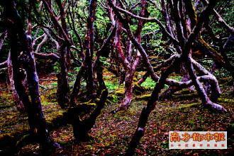 南坡原始森林里的落叶和苔藓 科考队供图