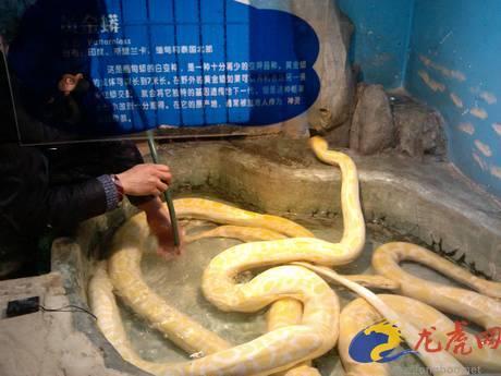 """蛇年到红山动物园来看蛇 龙虎网记者今日""""探营""""(组图)"""