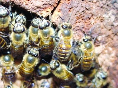 蜂蜜有类别,看看怎么分
