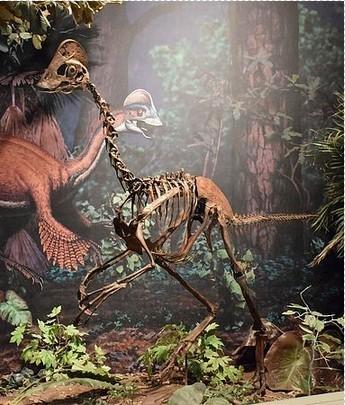 美国发现白垩纪时期新种类恐龙化石 体型似鸵鸟; 恐龙种类图片大全